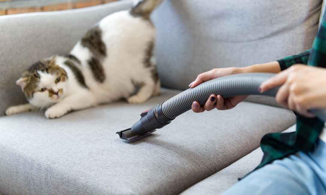 pulire casa con animali domestici
