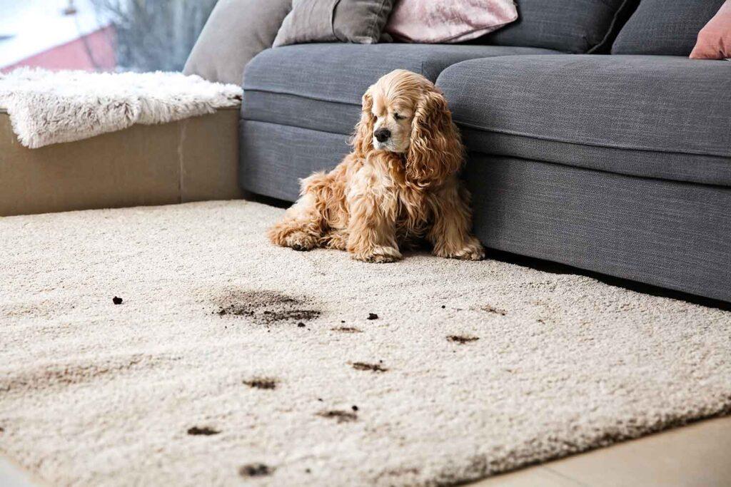 pulizia casa con animali domestici