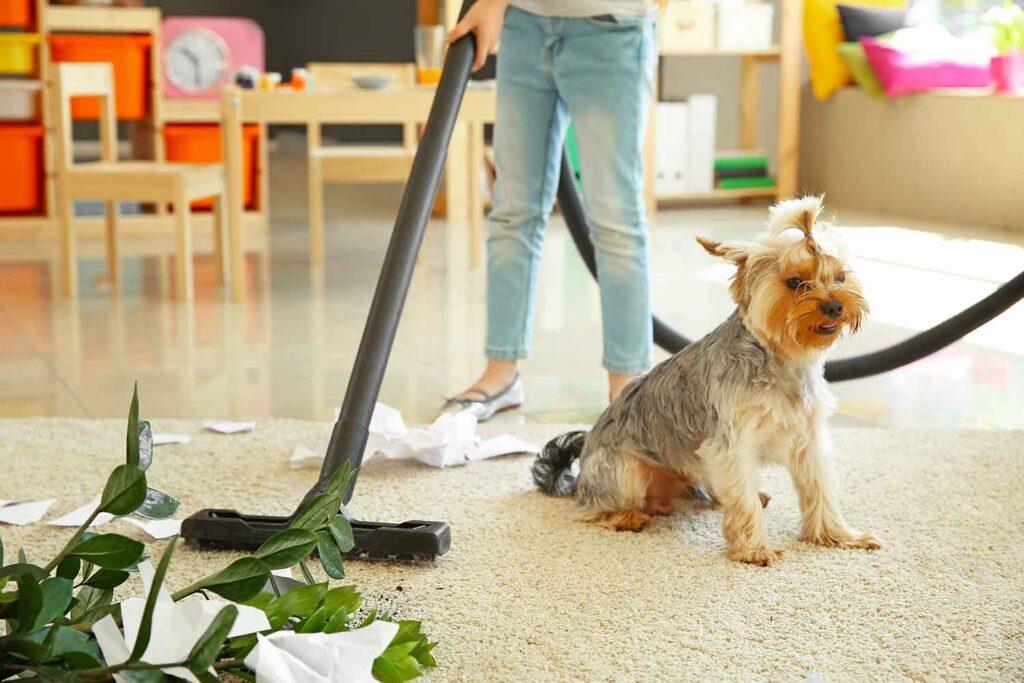 animali domestici e pulizia aspiratore