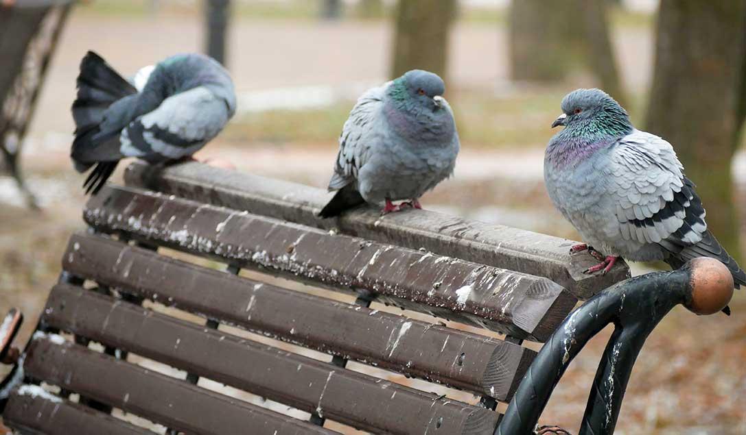 come-pulire-guano-di-piccione