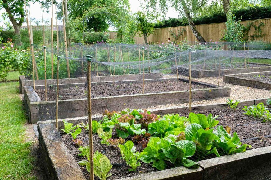 come-proteggere-le-piante-dalla-pioggia-rete-antigrandine