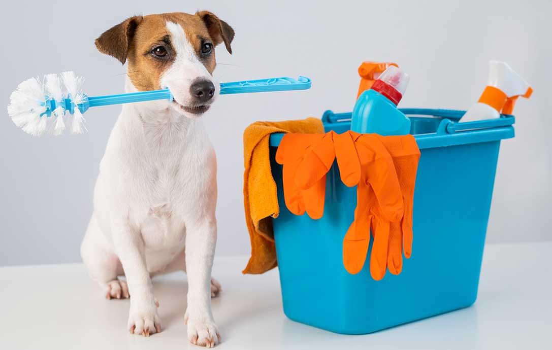 Come pulire pipì di cane